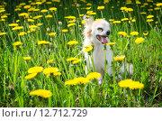Яркая солнечная собака в цветах. Стоковое фото, фотограф Екатерина Ветошкина / Фотобанк Лори