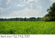 Летняя солнечная поляна. Стоковое фото, фотограф Екатерина Ветошкина / Фотобанк Лори