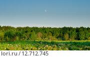 Солнечный вечер в летнем лесу освещенный солнцем и луной. Стоковое фото, фотограф Екатерина Ветошкина / Фотобанк Лори