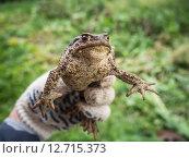 Лягушка. Стоковое фото, фотограф Сергей Макаров / Фотобанк Лори