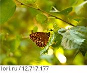 Бабочка на листе дерева. Стоковое фото, фотограф Нефедьев Леонид / Фотобанк Лори