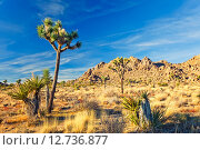 Купить «Joshua Tree National Park, California», фото № 12736877, снято 21 августа 2018 г. (c) Sergey Borisov / Фотобанк Лори