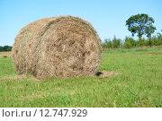 Рулон сена лежит на зеленом лугу. Лето. Стоковое фото, фотограф Ирина Борсученко / Фотобанк Лори