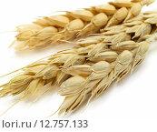 Купить «Wheat,Wheat,Wheat,Wheat,Wheat,Wheat,Wheat,Wheat», фото № 12757133, снято 22 августа 2018 г. (c) PantherMedia / Фотобанк Лори