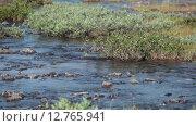 Купить «Бассейн реки Кунийок в долине. Тундровые заросли. Хибины, Кольский полуостров», видеоролик № 12765941, снято 1 сентября 2015 г. (c) Кекяляйнен Андрей / Фотобанк Лори