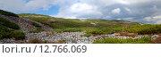 Отроги каменные осыпи горы Облачная. Кедровый стланик. Панорама. Стоковое фото, фотограф Сергеев Игорь / Фотобанк Лори