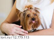 Купить «Female owner holding Yorkshire Terrier», фото № 12779113, снято 18 декабря 2018 г. (c) Яков Филимонов / Фотобанк Лори