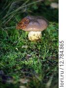Купить «Гриб в лесу», фото № 12784865, снято 1 октября 2007 г. (c) Морозова Татьяна / Фотобанк Лори