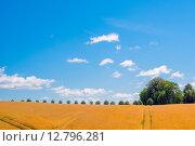 Купить «Trees on a row in a countryside landscape», фото № 12796281, снято 22 мая 2019 г. (c) PantherMedia / Фотобанк Лори