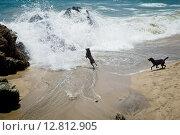 Две собаки играют на морском берегу. Стоковое фото, фотограф Anya Stogova / Фотобанк Лори