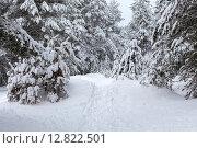 Купить «Тропинка со следами на снегу в зимнем лесу среди деревьев», фото № 12822501, снято 20 декабря 2014 г. (c) Кекяляйнен Андрей / Фотобанк Лори