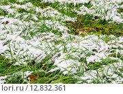 Купить «Первый снег в октябре», фото № 12832361, снято 9 октября 2015 г. (c) Алёшина Оксана / Фотобанк Лори