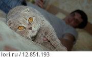 Купить «Шотландская вислоухая кошка», видеоролик № 12851193, снято 9 октября 2015 г. (c) Александр Багно / Фотобанк Лори