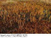 Затопленное водой лесное болото осенью ярко желто-красного цвета. Стоковое фото, фотограф Сергей Кудрявцев / Фотобанк Лори