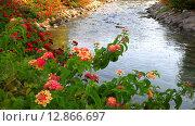 Купить «Яркие цветы  лантаны сводчатой украшают берега  ручья в парке солнечным летним днем (лат. Lantana camara L.)», видеоролик № 12866697, снято 9 октября 2015 г. (c) Виктория Катьянова / Фотобанк Лори