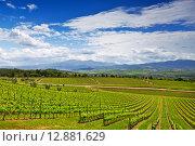 Купить «Виноградники Тосканы, Италия», фото № 12881629, снято 13 мая 2014 г. (c) Наталья Волкова / Фотобанк Лори