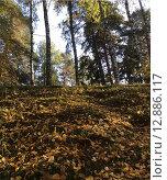 Осень. Стоковое фото, фотограф Елена Мухина / Фотобанк Лори