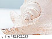 Фрагмент ракушки. Стоковое фото, фотограф Anya Stogova / Фотобанк Лори