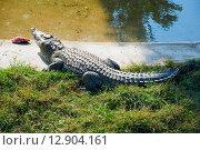 Купить «Крокодил у пруда», эксклюзивное фото № 12904161, снято 16 сентября 2015 г. (c) Александр Щепин / Фотобанк Лори
