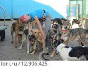 Волонтер приюта для бездомных животных с собаками. Стоковое фото, фотограф Елена Мусатова / Фотобанк Лори