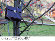 Коричневый портфель на ветках рябины. Стоковое фото, фотограф Tatyana Emelina / Фотобанк Лори