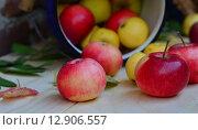 Вкусные красные и желтые среднего размера яблоки, выращенные в саду. Стоковое фото, фотограф Svetlana Agaeva / Фотобанк Лори