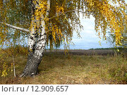 Родная природа. Стоковое фото, фотограф Щеголев Владимир / Фотобанк Лори