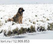 Бездомный пес сидит на берегу замёрзшего озера. Стоковое фото, фотограф Алексей Маринченко / Фотобанк Лори