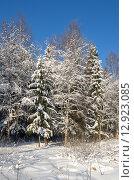 Купить «Заснеженные деревья на опушке леса», эксклюзивное фото № 12923085, снято 18 января 2014 г. (c) Елена Коромыслова / Фотобанк Лори