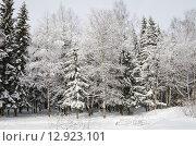 Купить «Зимний лес после снегопада», эксклюзивное фото № 12923101, снято 2 марта 2013 г. (c) Елена Коромыслова / Фотобанк Лори