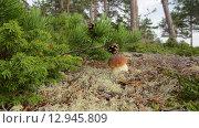 Белый гриб. Стоковое фото, фотограф Тамара Заводскова / Фотобанк Лори