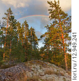Карелия. Летний пейзаж в лесу на вершине скалы с радугой во время заката. Стоковое фото, фотограф Горшков Игорь / Фотобанк Лори
