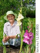Купить «Пожилая женщина улыбается на грядке с белым и сиреневым гладиолусами», фото № 12955893, снято 26 июля 2015 г. (c) Максим Мицун / Фотобанк Лори