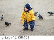 Купить «Мальчик и стая голубей», фото № 12958161, снято 15 октября 2013 г. (c) Наталья Степченкова / Фотобанк Лори