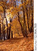 Купить «Красивая дорога через осенний лес, золотая пора», эксклюзивное фото № 12964769, снято 4 июля 2020 г. (c) Svet / Фотобанк Лори