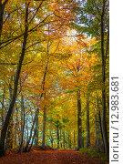 Купить «Tall trees in a forest at autumn», фото № 12983681, снято 22 мая 2019 г. (c) PantherMedia / Фотобанк Лори