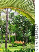 Купить «Тропический сад», фото № 12990537, снято 6 ноября 2008 г. (c) Морозова Татьяна / Фотобанк Лори