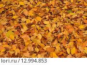 Сухие осенние листья. Стоковое фото, фотограф Станислав Самойлик / Фотобанк Лори