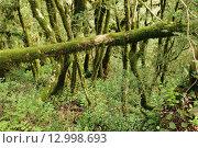 Купить «Лес. Тисо-самшитовая роща. Хоста. Сочи», эксклюзивное фото № 12998693, снято 30 сентября 2013 г. (c) Юрий Морозов / Фотобанк Лори