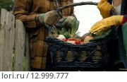 Купить «Basket of vegetables», видеоролик № 12999777, снято 5 июня 2020 г. (c) Wavebreak Media / Фотобанк Лори