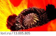 Мак садовый. Стоковое фото, фотограф Ситнер Илья / Фотобанк Лори