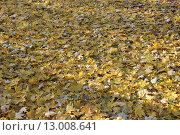 Желтые листья. Стоковое фото, фотограф Сергей Плохов / Фотобанк Лори