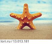 Купить «Starfish on the summer beach», фото № 13013181, снято 19 марта 2019 г. (c) PantherMedia / Фотобанк Лори