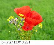 Купить «Summer field of red poppies and wild flowers», фото № 13013281, снято 19 марта 2019 г. (c) PantherMedia / Фотобанк Лори