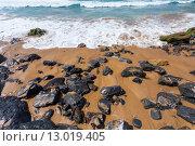 Купить «Algarve region beach, Portugal», фото № 13019405, снято 19 июня 2019 г. (c) PantherMedia / Фотобанк Лори