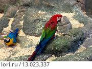 Купить «Попугай красный Ара», фото № 13023337, снято 28 октября 2015 г. (c) Галина Савина / Фотобанк Лори