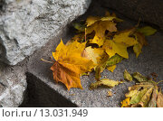 Купить «close up of fallen maple leaves on stone stairs», фото № 13031949, снято 9 октября 2015 г. (c) Syda Productions / Фотобанк Лори