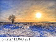 Одинокое дерево в зимний морозный солнечный день. Стоковое фото, фотограф Александр Корчагин / Фотобанк Лори