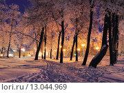 Купить «Зимний вечер в парке», фото № 13044969, снято 16 июля 2019 г. (c) Зезелина Марина / Фотобанк Лори