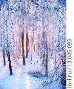 Купить «Морозное утро в  зимнем лесу», фото № 13045093, снято 26 октября 2012 г. (c) Зезелина Марина / Фотобанк Лори